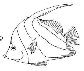 Le miracle du lagon le partage c 39 est classe maternelle - Modele poisson ...