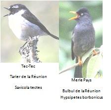 oiseaux comptines
